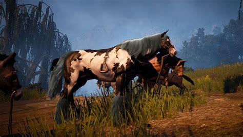 horse taming jooinn animal