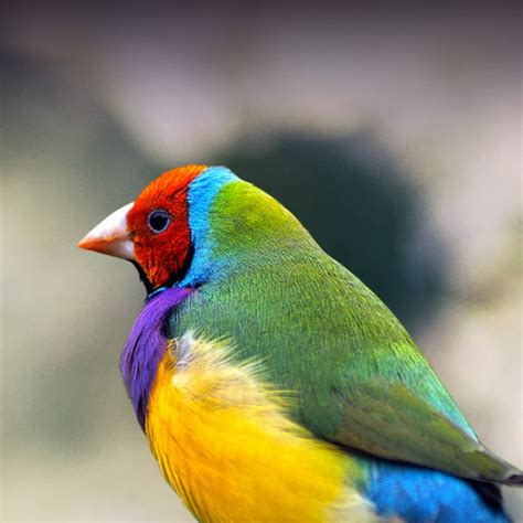gouldian finch personality food care pet birds