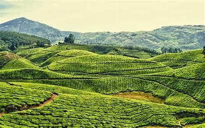 India Kerala Kodaikanal Daily Tea Plantation Fields
