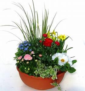Kübel Bepflanzen Winterhart : pflanzen set f r schale und k bel pflanzen versand harro ~ Michelbontemps.com Haus und Dekorationen