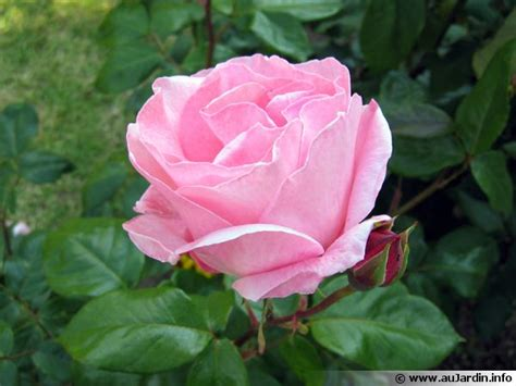 comment cuisiner les legumes le parfum des roses