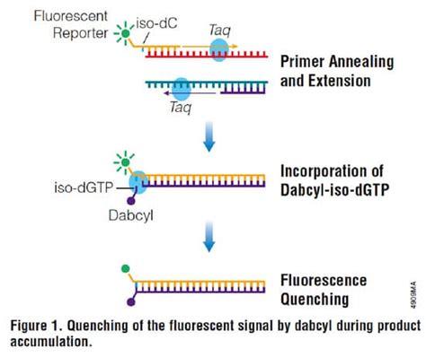 qpcr primer design get the qpcr fluorescence low with plexor bitesize bio