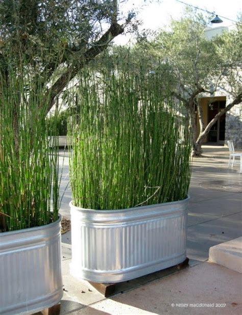 Zitronengras Gegen Mücken by Garten Sch 246 Ner Sichtschutz Mit Bambuspflanze In Einer
