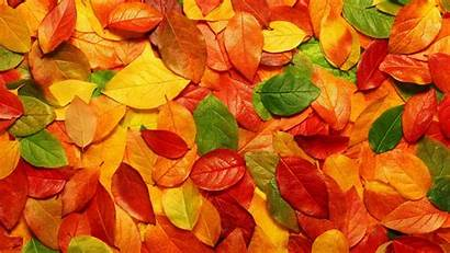 Autumn Leaves Wallpapers Colours Leave Fall Nature
