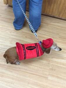 Pup photo chelsea in fire hydrant red dogville daycare for Red dog daycare