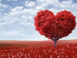 beautiful love ... Love