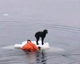 Dogs Saving People