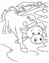 Buffalo Coloring Water Pages Getcolorings Printable sketch template