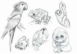 Rainforest Animal Sketches by SheWhoSoars on DeviantArt  Jungle Drawing With Animals
