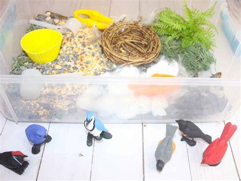 bird sensory bin   nest building activity views