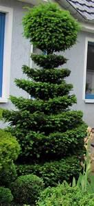 Buchsbaum Schablone Kaufen : garten anders formschnitt f r geh lze beispiele und tipps ~ Watch28wear.com Haus und Dekorationen