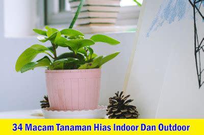 macam tanaman hias indoor outdoor jasa tukang