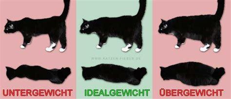 gewichtsprobleme bei katzen abnehmen zunehmen
