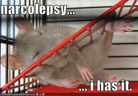 Narcolepsy Meme - 17 best images about memes for narcolepsy sleep on pinterest cats story of my life and so tired