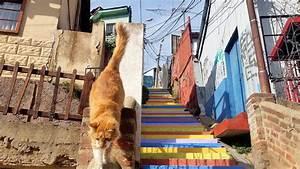 Color y arte urbano en las escaleras del mundo