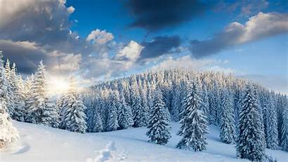 Winter Forest Background Wallpapers Night Backgrounds Snow