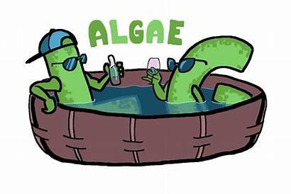 Algae Gay Discuss Lg Among Community Lesbians