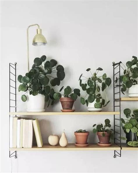 plante verte chambre 1000 idées à propos de plante d 39 intérieur sur