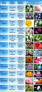 Choker Length Chart Birth Flowers April 39 S Daisy And Sweet Pea