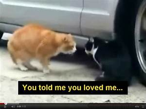 Funny Animals Pictures with Funny Sayings in Hindi Saying ...