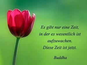 Buddha Sprüche Bilder : tulpenbilder kostenlos tulpen fotos gratis ~ Orissabook.com Haus und Dekorationen