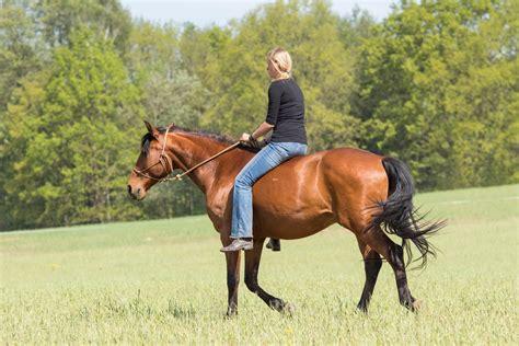 reiten ohne sattel weinzierl horsemanship