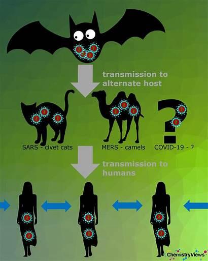 Coronavirus Host Cell Entering Bats Reservoir Strains