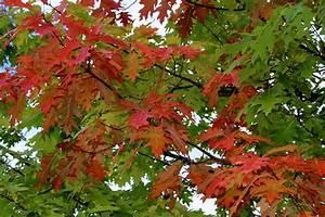 Garten Im Oktober : der garten im oktober garten wissen ~ Lizthompson.info Haus und Dekorationen