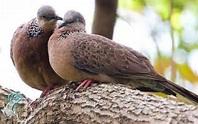 Người Phương Nam: Đôi Chim Cu Đất và Mối Tình Già - Cao Đắc Vinh