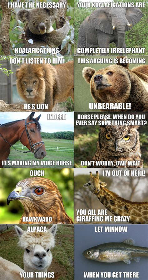 Memes Animals - animal animal animal september 2012