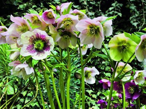 Winterpflanzen Für Balkon by Gartentipps F 252 R Den Dezember Garten Balkon Pflanzen