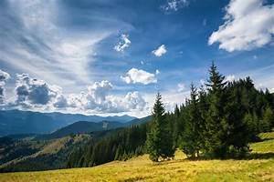 Amazing, Sunny, Landscape, With, Pine, Tree, Highland, Forest