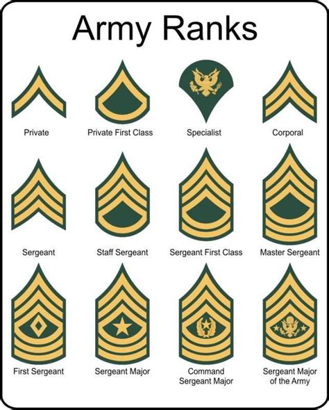 military  army rank insignia metal sign  army ranks army military