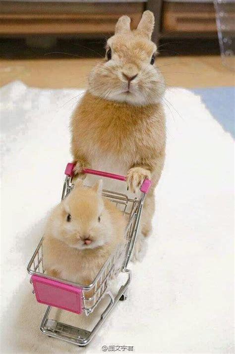 pin von mari auf awwwwwanimals pinterest kaninchen