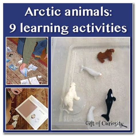 arctic animal activities for preschool 1000 images about preschool arctic animals on 790