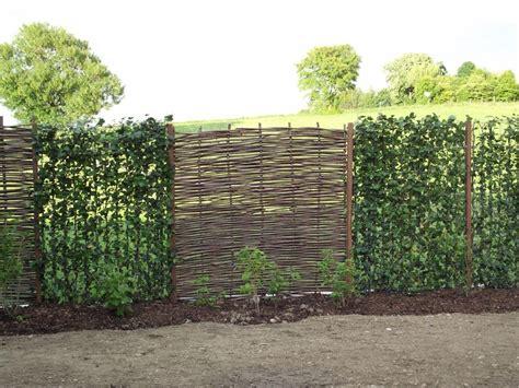 Die Hecke Natuerlicher Zaun Und Sichtschutz by Haselnuss Element Als Sichtschutz In Der Hecke Garten