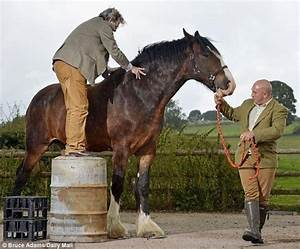 What is the largest horse breed in the world? How are they ...