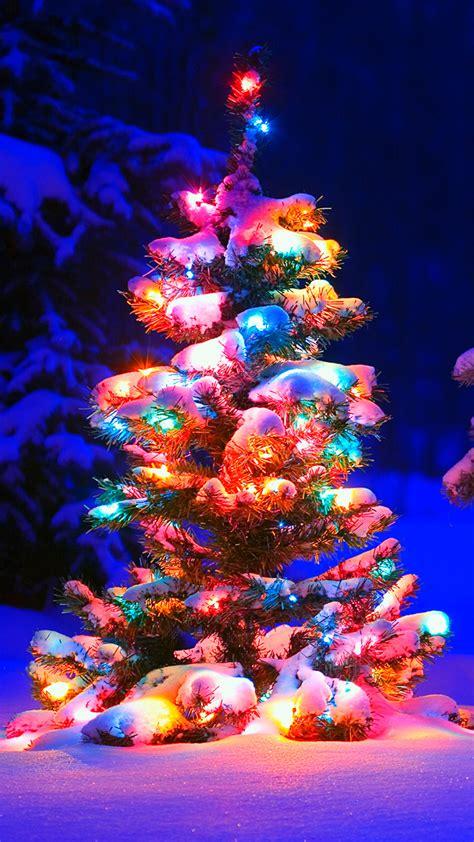 tree lights snow