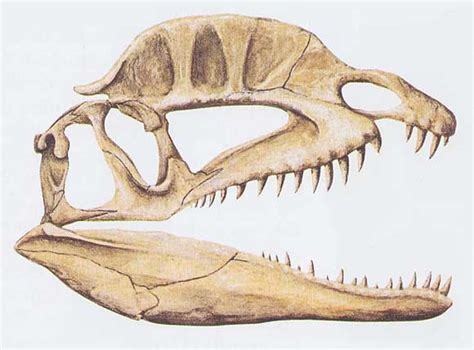 dilophosaurus en images dinosoria