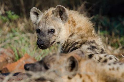 Das Wildtier Im Tierlexikon