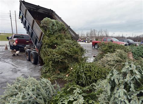 sue scholz recycle your christmas tree entertainment
