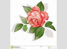 Tatouage Iris Fleur Signification Printablehd