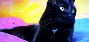 Gattini appena nati banchettano felici! [VIDEO]
