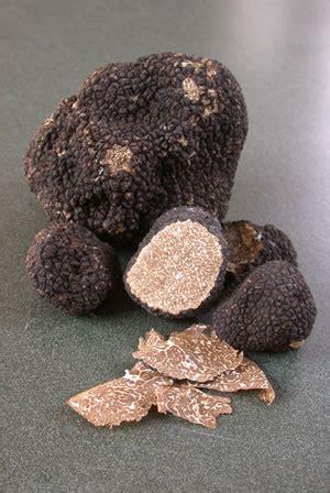 principles  truffle farming  world truffieres