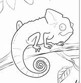 Chameleon Coloring Pages Printable Template Outline Drawing Mixed Animal Sheets Lizard Colouring Colour Chameleons Carle Eric Print Cameleon Animalcoloringpages7 Getdrawings sketch template
