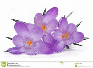 Spring Flowers On A White Background Stock Photos - Image ...