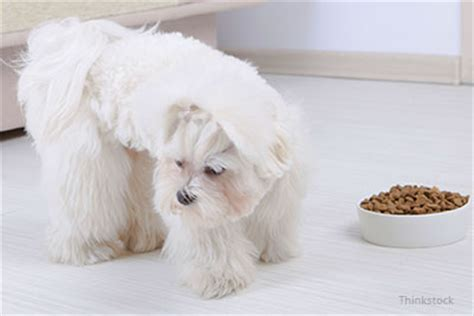 dog  picky eater pets grooming