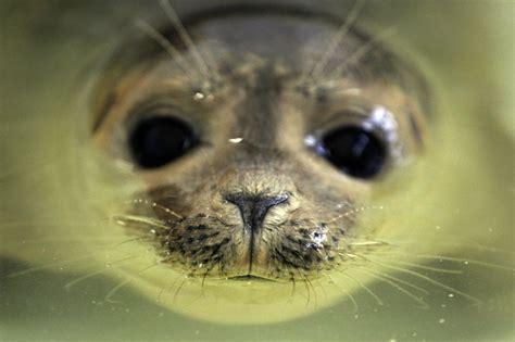 zeehonden op weg naar vrijheid aangereden trouw