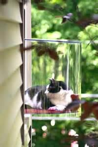 cat window smart cat window should cats be kept strictly indoors