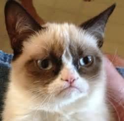 what of cat is grumpy cat grumpy cat meme photo 35215475 fanpop